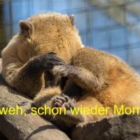 Dieser Montag !