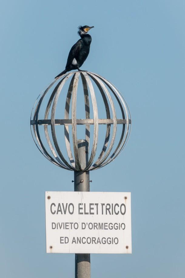 foto,photo,fotografie,photography,bilder,pictures,reisen,travel,sightseeing,besichtigung,venedig,venezia,italien,italy,elektrizität,electricity,kormoran,vogel,cormorant,bird,lagune,lagoon